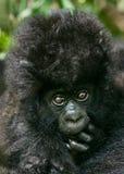Behandla som ett barn gorillan Arkivfoto