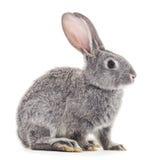 behandla som ett barn grå kanin Royaltyfria Bilder