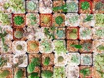 Behandla som ett barn grönska för modellen för tegelplattan för kaktusartkrukan arkivfoton