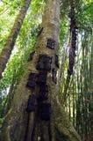 Behandla som ett barn gravar i en stor trädstam i Indonesien Arkivbilder