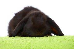 behandla som ett barn gullig kanin Arkivbilder