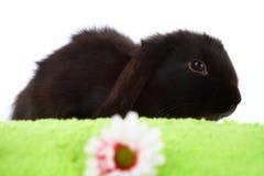 behandla som ett barn gullig kanin Royaltyfria Bilder
