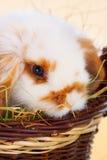 behandla som ett barn gullig kanin Royaltyfri Bild