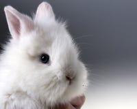 behandla som ett barn gullig kanin Arkivfoton