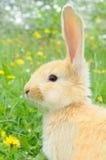 behandla som ett barn gullig kanin Royaltyfria Foton