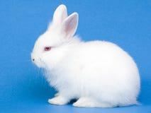 behandla som ett barn gullig kaninwhite Arkivbild