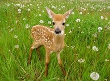 behandla som ett barn gulliga hjortar Arkivbild