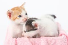behandla som ett barn gulliga kattungar två Royaltyfria Foton
