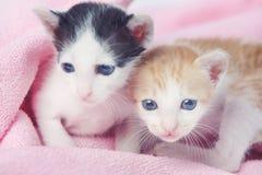behandla som ett barn gulliga kattungar två Royaltyfri Fotografi