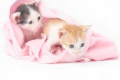 behandla som ett barn gulliga kattungar två Arkivbilder