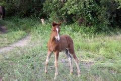 Behandla som ett barn hästen Royaltyfria Bilder