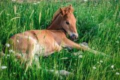 Behandla som ett barn hästen arkivfoton