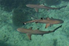 Behandla som ett barn hajen i havet Royaltyfri Bild