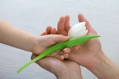 Behandla som ett barn handen med blomman i moder som ` s gömma i handflatan Royaltyfri Foto