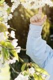Behandla som ett barn handen som pekar på blommande träd för den körsbärsröda blomningen Royaltyfri Foto