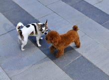 behandla som ett barn hundar två Arkivbilder