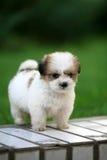 behandla som ett barn hunden Royaltyfri Foto