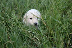 Behandla som ett barn hunden Royaltyfri Fotografi