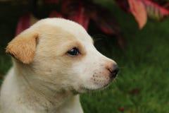 Behandla som ett barn hunden Fotografering för Bildbyråer