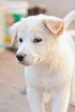 Behandla som ett barn hundvit och gulligt Arkivbild
