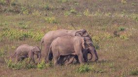 behandla som ett barn indiska elefanter royaltyfri foto