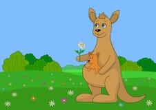 behandla som ett barn kängurun Arkivbilder