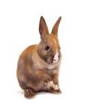 behandla som ett barn kanin Arkivbilder