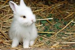 behandla som ett barn kanin Royaltyfri Bild
