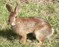behandla som ett barn kanin Arkivfoton