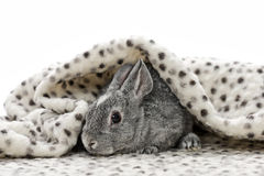 Behandla som ett barn kanin Royaltyfri Foto