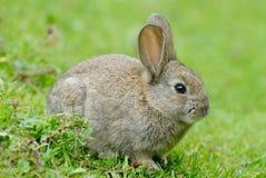 behandla som ett barn kanin Arkivfoto