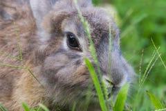 Behandla som ett barn kanin i gräs Royaltyfria Foton