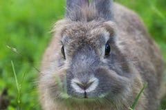 Behandla som ett barn kanin i gräs arkivbilder