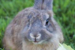 Behandla som ett barn kanin i gräs arkivfoto