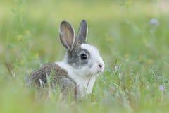 Behandla som ett barn kanin i gräset royaltyfri fotografi
