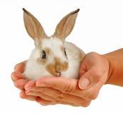 Behandla som ett barn kanin i händer Royaltyfri Foto