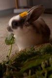 Behandla som ett barn kanin som äter gräsplaner Royaltyfria Bilder