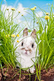 Behandla som ett barn Kaninchen im Gras Arkivbild