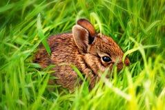 behandla som ett barn kaninen Fotografering för Bildbyråer