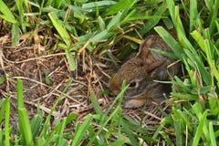 Behandla som ett barn kaninen Arkivfoto