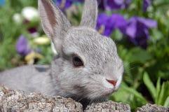behandla som ett barn kaninen Arkivfoton