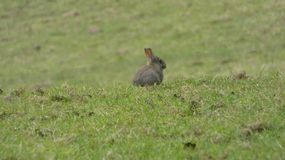 Behandla som ett barn kaninen i ett allt fält bara royaltyfri fotografi