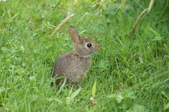 Behandla som ett barn kaninen i gräset Arkivfoto