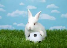 Behandla som ett barn kaninen på fotbollboll i grönt gräs royaltyfri foto