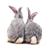 Behandla som ett barn kaniner royaltyfri foto
