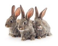 Behandla som ett barn kaniner Arkivbild