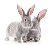 Behandla som ett barn kaniner royaltyfria bilder