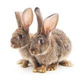 Behandla som ett barn kaniner arkivfoton