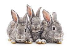 Behandla som ett barn kaniner fotografering för bildbyråer