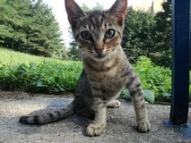 Behandla som ett barn kattcloseupen royaltyfri fotografi
